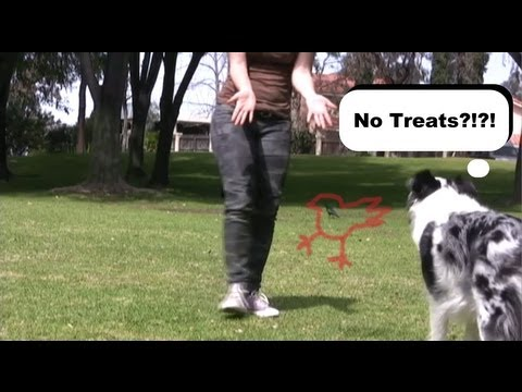 dispelling myths on dog training
