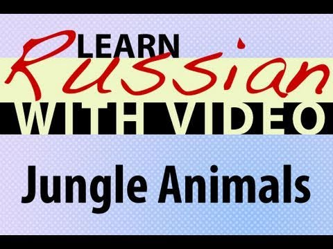 Learn Russian with Video - Jungle Animals