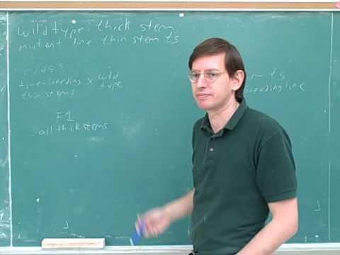 Biology: Mendelian genetics (4)