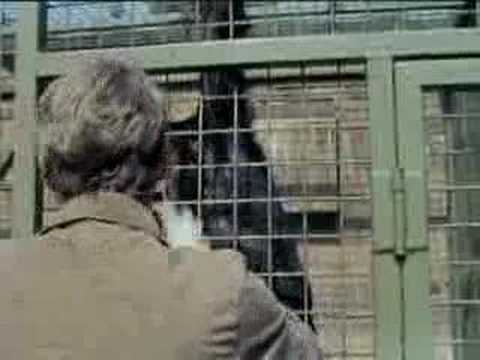 Monkey business - Some Mothers Do 'Ave 'Em - BBC classic comedy