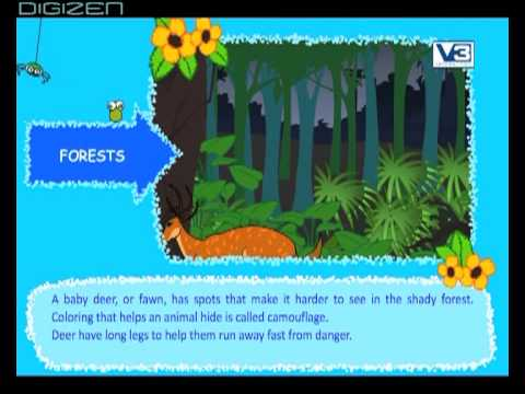 Types of forest