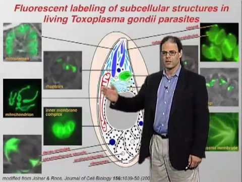 David Roos (U Penn) Part 1: Biology of Apicomplexan Parasites