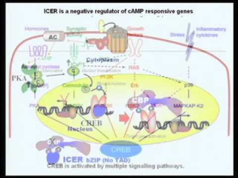 Mod-05 Lec-16 Regulation of gene expression by cyclicAMP