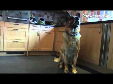 How to Prepare Your Dog for Guard-Dog Training