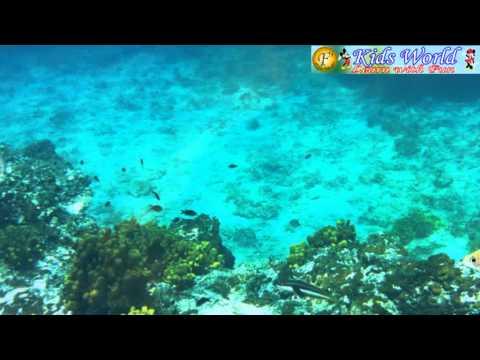 Nursery Rhymes - Machli (Fish)