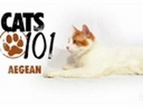 Aegean | Cats 101