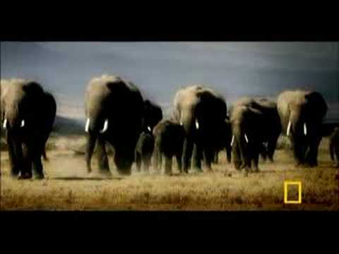Revenge of the Elephants