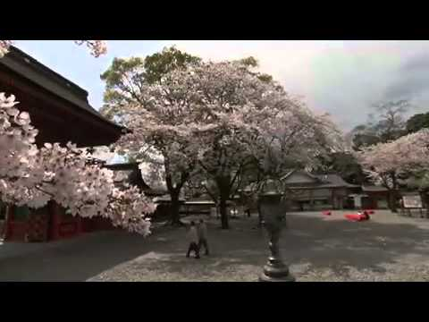 The Coolest Stuff on the Planet - Japanese Cherry Blossoms