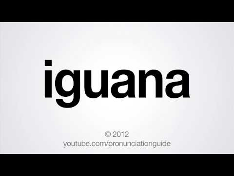 How to Pronounce Iguana