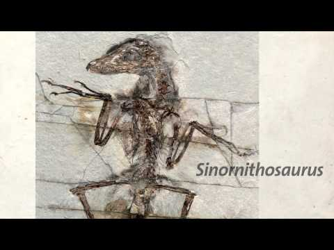 New Research Points to Dinosaurs' Colorful Past