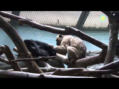 The National Zoo Welcomes a Baby Howler Monkey