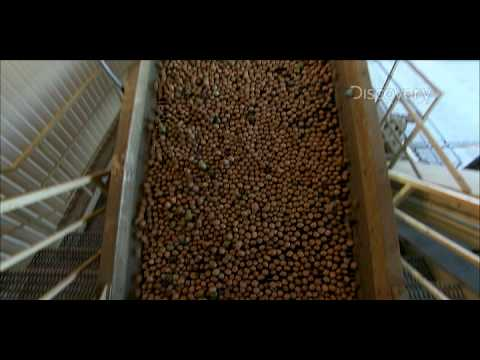 Dirty Jobs - Walnut Processor