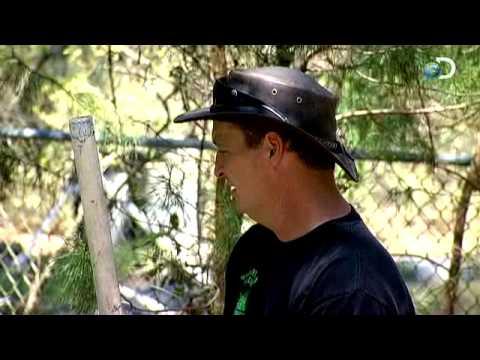 Swamp Brothers - The NutCROCker