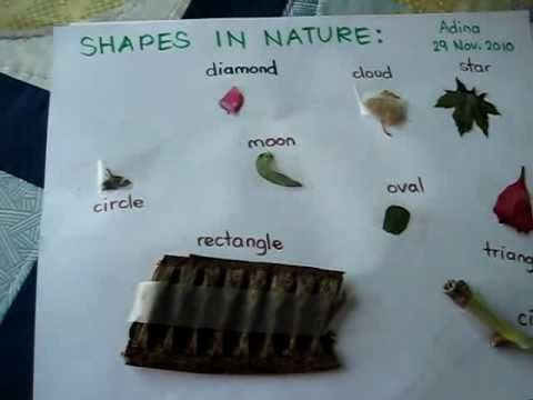 Grade 1.Science. Shapes in nature