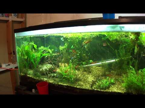 Methane & Alcohol In Planted Tank & Results