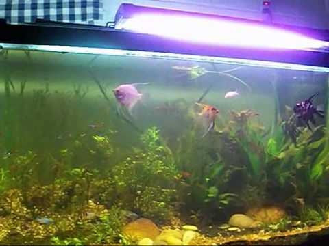 How To Get Rid of Algae Problems In The Aquarium And Solutions