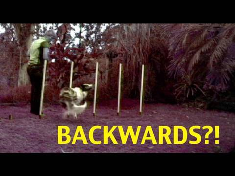 Amazing dog trick- never seen before dog training!