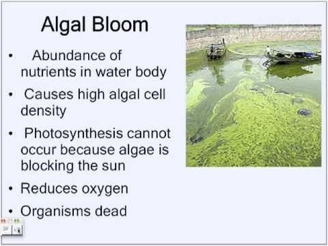 Effects of Nitrogen in Ecosystems by Angel & Shellana