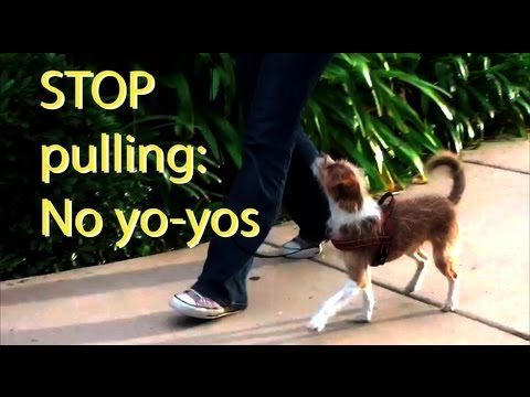 "Stop pulling and ""Yo-yoing""- clicker dog training"