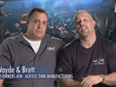 Tanked - Top 5 Saltwater Fish