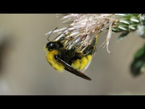 Science Bulletins: Bee Deaths Linked to Common Pesticides