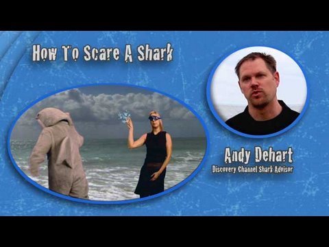 Shark Week 101: How to Scare a Shark