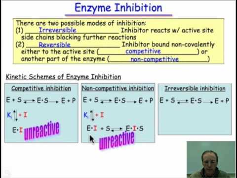 Molecular Mimicry: the Basis of Enzyme Inhibition
