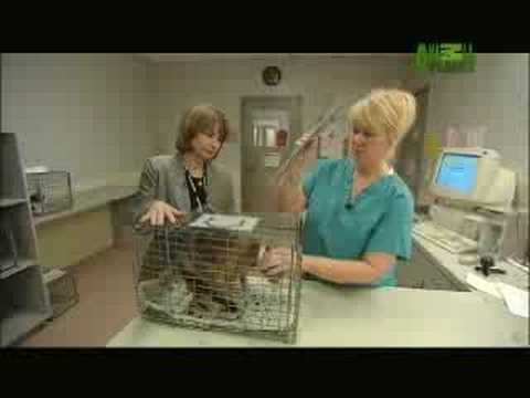Animal Cops - Houston: Cat Evaluation