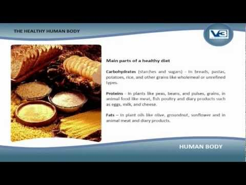 Human Body The Healthy Human Body