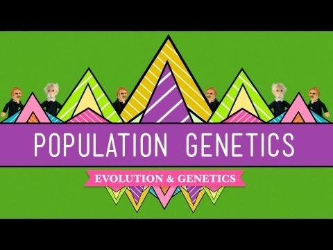 Population Genetics: When Darwin Met Mendel - CrashCourse Biology #18