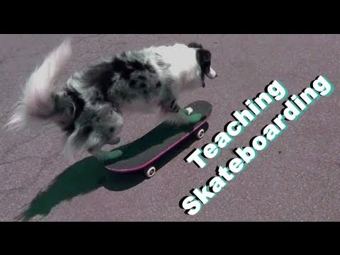 Teach Skateboarding- Clicker Dog Training