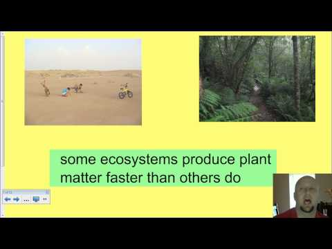 APES Ecosystem Energy Flow