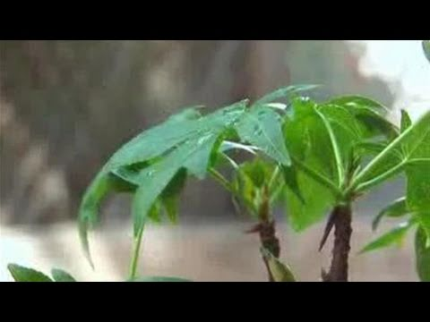 How To Prepare Organic Plant Food