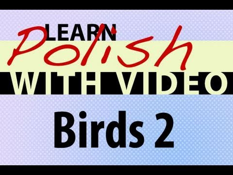 Learn Polish with Video - Birds 2