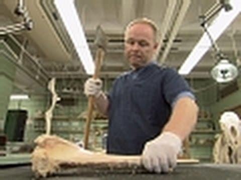 Jurassic CSI - Breaking Bones
