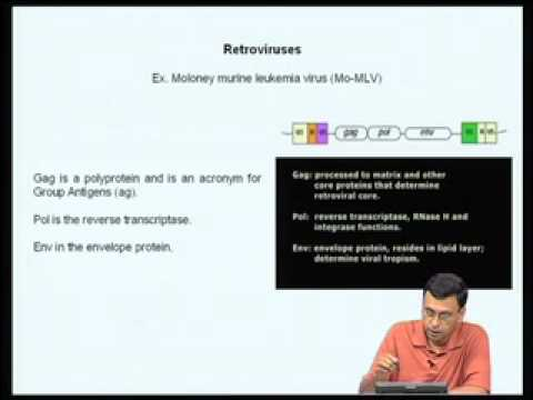 Mod-08 Lec-32 Eukaryotic protein expression systems-III