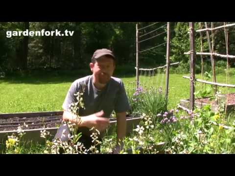 Vegetable Gardening in spring, how to grow vegetables