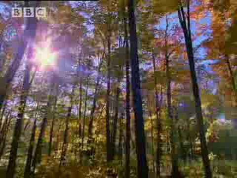 BBC: A Moose Named Madeline - Colours of Fall