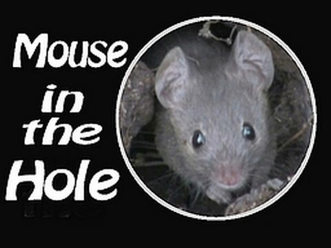 MOUSE IN THE HOLE