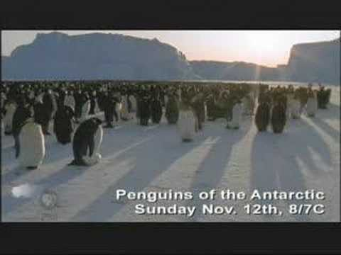 "NATURE ""Penguins of the Antarctic"" 