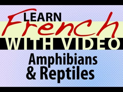 Learn French with Videos - Amphibians and Reptiles