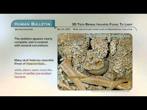 Science Bulletins: 3D Tech Brings Isolated Fossil to Light