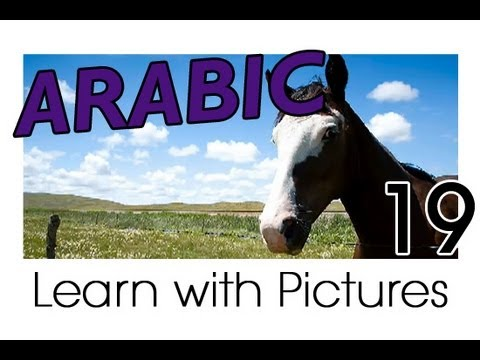Learn Arabic - Arabic Farm Animals Vocabulary
