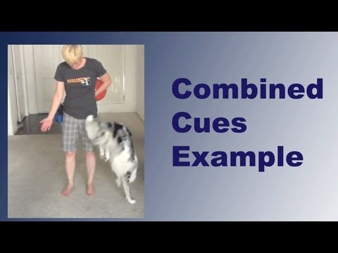 Combined cues- clicker dog training tricks