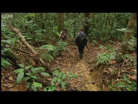 Chasing Frogs - Expedition Borneo - BBC