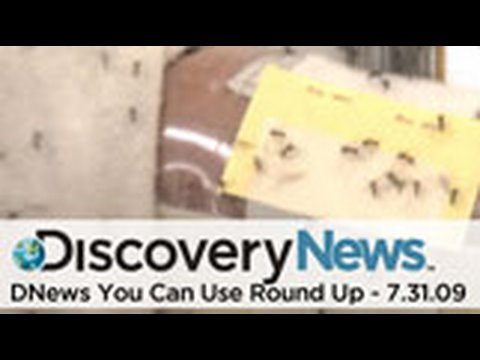 DNews You Can Use Round-Up 7.31.09