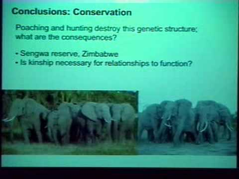 Beth Archie - Kinship and the Social Lives of African Elephants