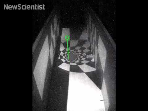 Trapped fruit fly in holodeck illusion