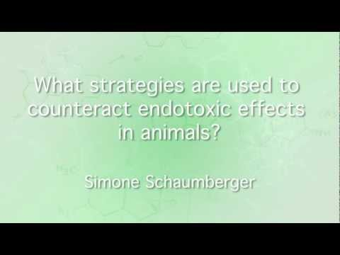 What strategies are used to counteract endotoxic effects in animals?