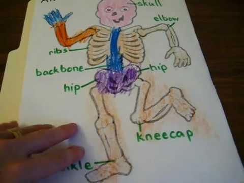 Preschool - Science. Bones lapbook